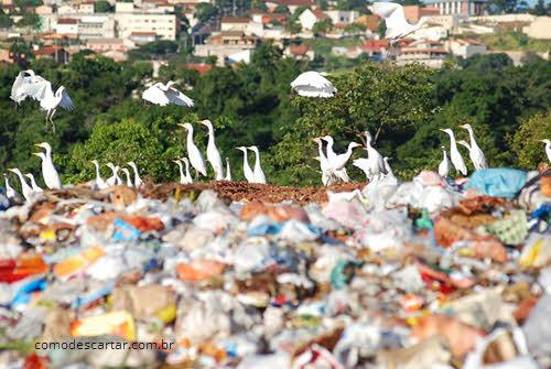 Pássaros no aterro sanitário, descarte consciente para o meio ambiente