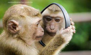 Macaquinho olhando no espelho, como descartar espelho quebrado