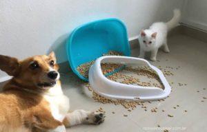 Como descartar areia de gato