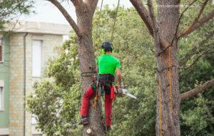 Como descartar podas de árvores, galhos, cortes